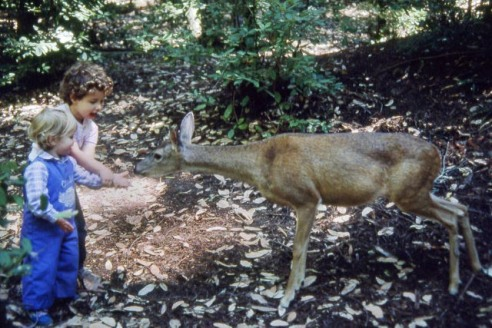 1986-05 Camping @Big Basin T&K with deer